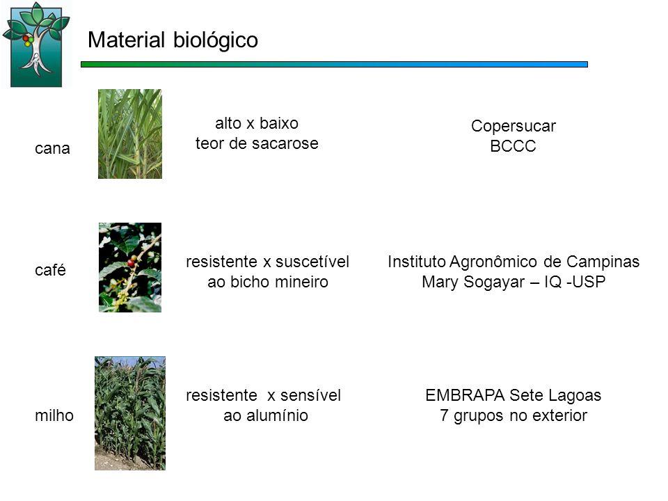 resistente x suscetível ao bicho mineiro café Instituto Agronômico de Campinas Mary Sogayar – IQ -USP alto x baixo teor de sacarose cana Copersucar BC