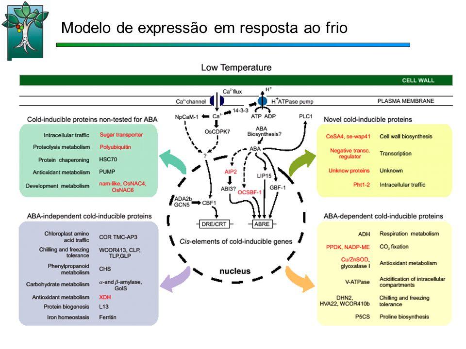 Modelo de expressão em resposta ao frio