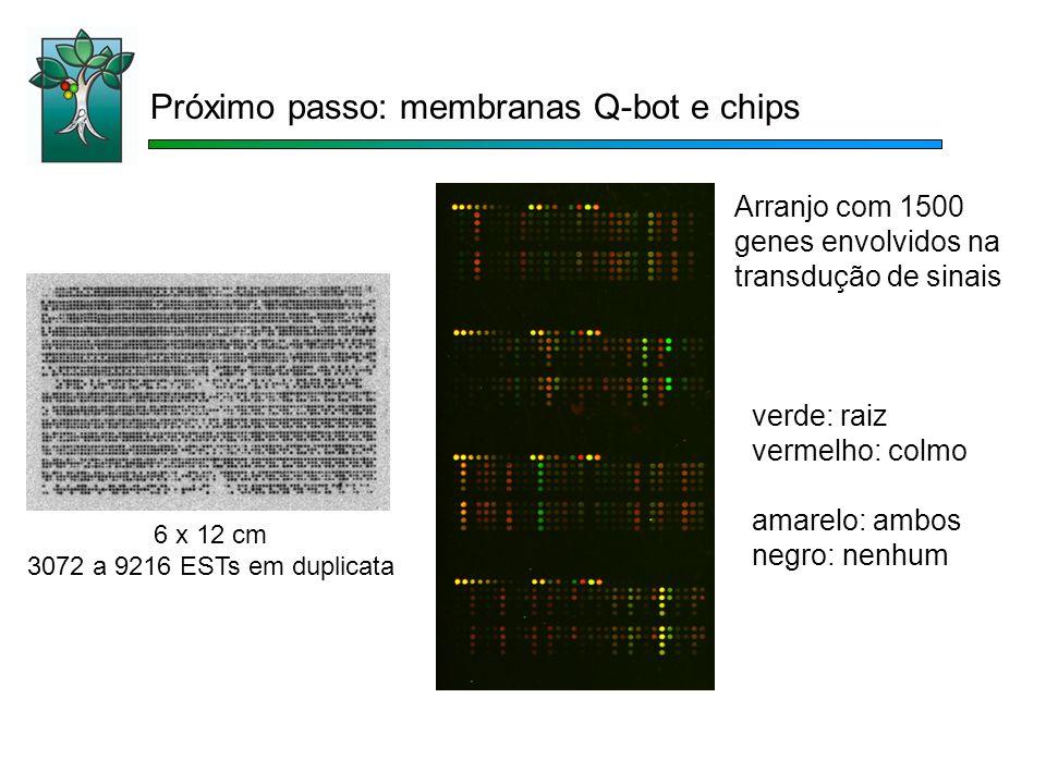 Próximo passo: membranas Q-bot e chips verde: raiz vermelho: colmo amarelo: ambos negro: nenhum Arranjo com 1500 genes envolvidos na transdução de sinais 6 x 12 cm 3072 a 9216 ESTs em duplicata
