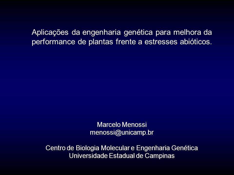 Comentários finais Esforço multidisciplinar é essencial Ensaios em plantas transgênicas de tabaco e Arabidopsis permitem avaliar o impacto de cada gene na tolerância As tecnologias genômicas permitirão identificar genes ativados durante os estresses