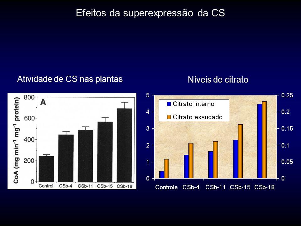 Atividade de CS nas plantas Níveis de citrato Efeitos da superexpressão da CS