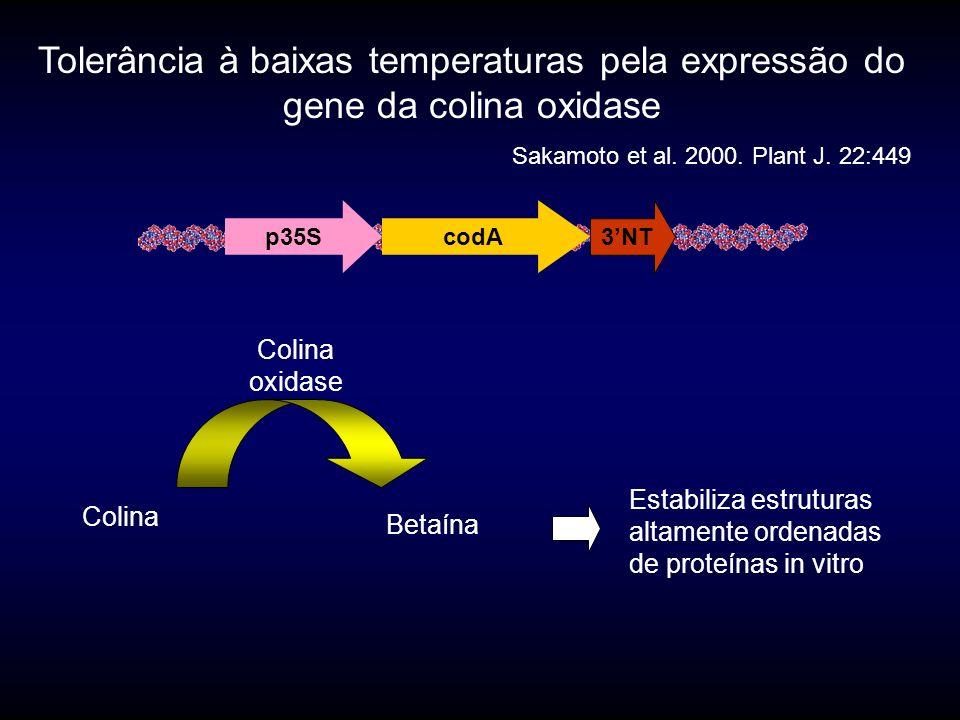 Tolerância à baixas temperaturas pela expressão do gene da colina oxidase Sakamoto et al.