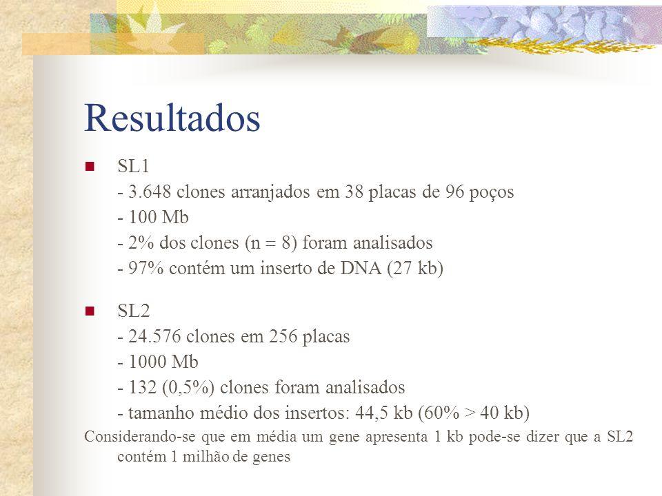 Resultados SL1 - 3.648 clones arranjados em 38 placas de 96 poços - 100 Mb - 2% dos clones (n 8) foram analisados - 97% contém um inserto de DNA (27 k