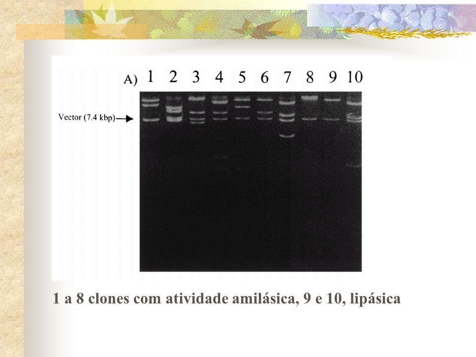 1 a 8 clones com atividade amilásica, 9 e 10, lipásica