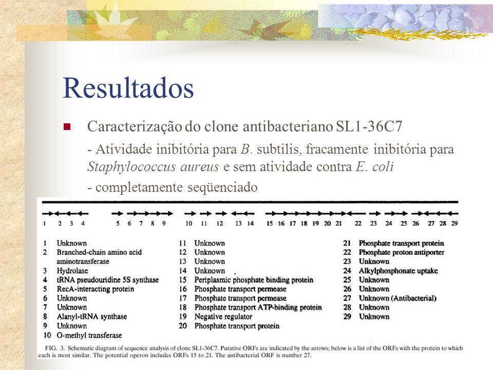 Resultados Caracterização do clone antibacteriano SL1-36C7 - Atividade inibitória para B. subtilis, fracamente inibitória para Staphylococcus aureus e