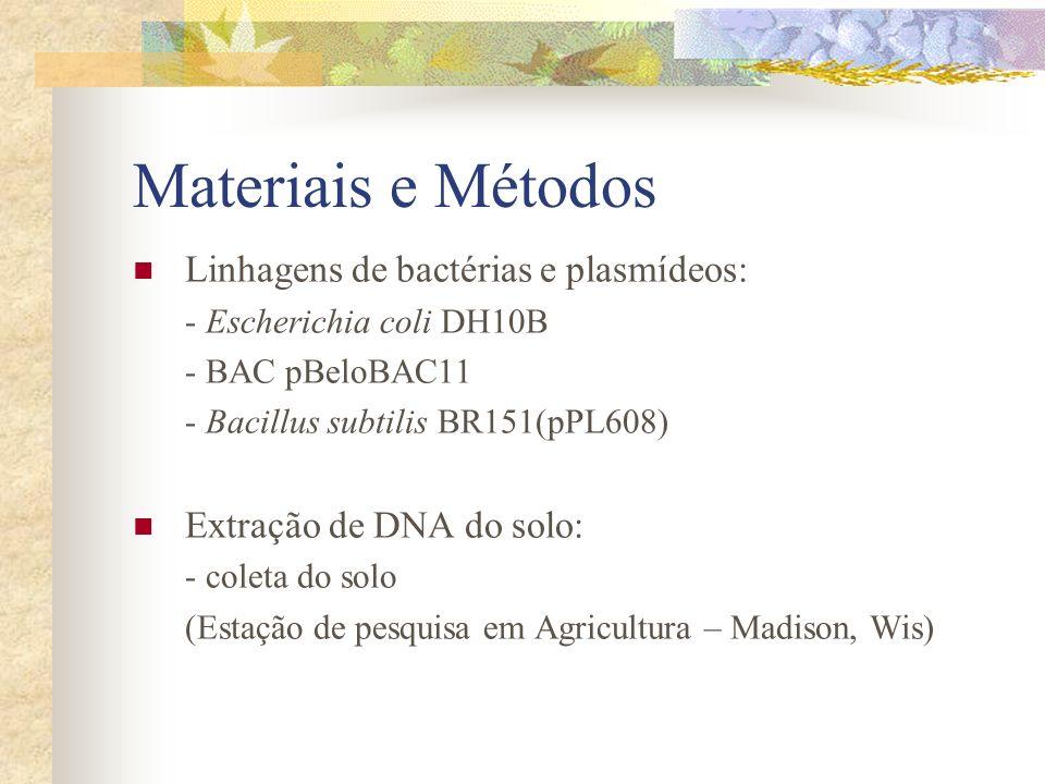 Materiais e Métodos Extração de DNA do solo: - 5g suspendidas em 10 ml de tampão - Incubação a 60°C por 2 hs - Extração do DNA com clorofórmio e precipitação com isopropanol - Dissolução em água (500 μl) - Eletroforese em gel de agarose - Armazenamento em TE + poliaminas overnight OBS: em numerosos experimentos esta metodologia produziu DNA de tamanho e limpeza apropriados para a clonagem subseqüente