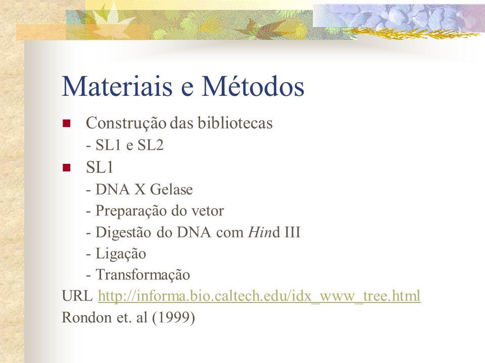 Materiais e Métodos SL2 - Preparação do vetor (digestão, ligação, gel, seleção e eluição) - DNA metagenômico: eletroforese do tipo pulsed-field (> 50 kb) - Digestão com Hind III e eletroforese (insertos 40 kb) - Ligação - Transformação - Armazenamento