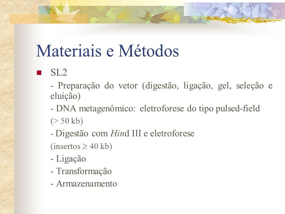 Materiais e Métodos Amplificação por PCR, clonagem e seqüenciamento de genes ribossomais 16S da SL1 - PCR: 48 conjuntos de clones (primers específicos + oligonucleotídeo competitivo) - Clonagem - Seqüenciamento (ABI modelo 377) Seleção de clones - SL1 testes para a detecção da atividade das seguintes enzimas: - lactamase, celulase, protease, queratinase, quitinase, lipase, esterase, amilase e Dnase DH10B/pBeloBAC11 (controle -) e linhagens ou enzimas purificadas (controle +)