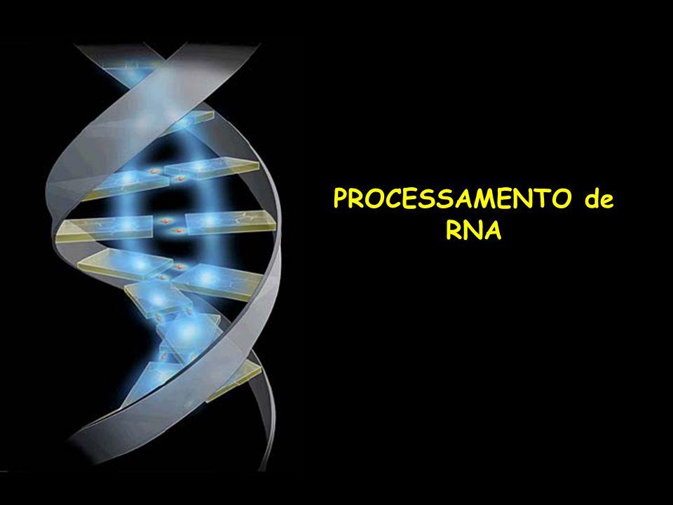 Sinais codificados no DNA e presentes no RNAm são reconhecidos por proteínas e enzimas que se ligam ao RNA.