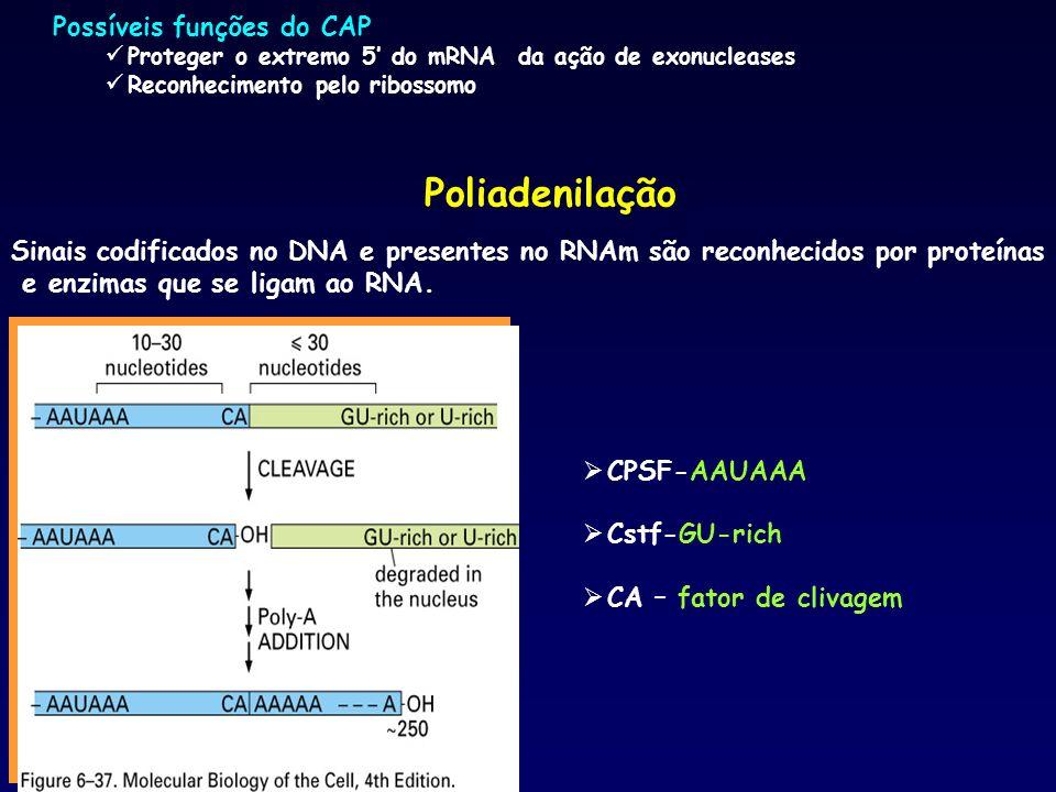 Sinais codificados no DNA e presentes no RNAm são reconhecidos por proteínas e enzimas que se ligam ao RNA. Poliadenilação CPSF-AAUAAA Cstf-GU-rich CA