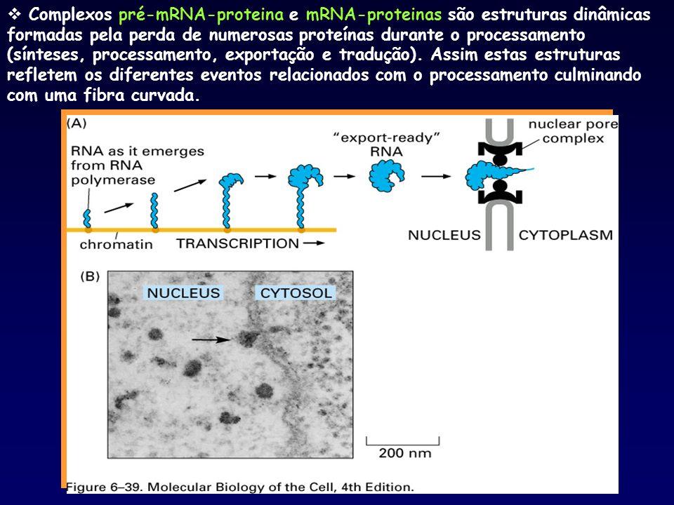 Complexos pré-mRNA-proteina e mRNA-proteinas são estruturas dinâmicas formadas pela perda de numerosas proteínas durante o processamento (sínteses, pr