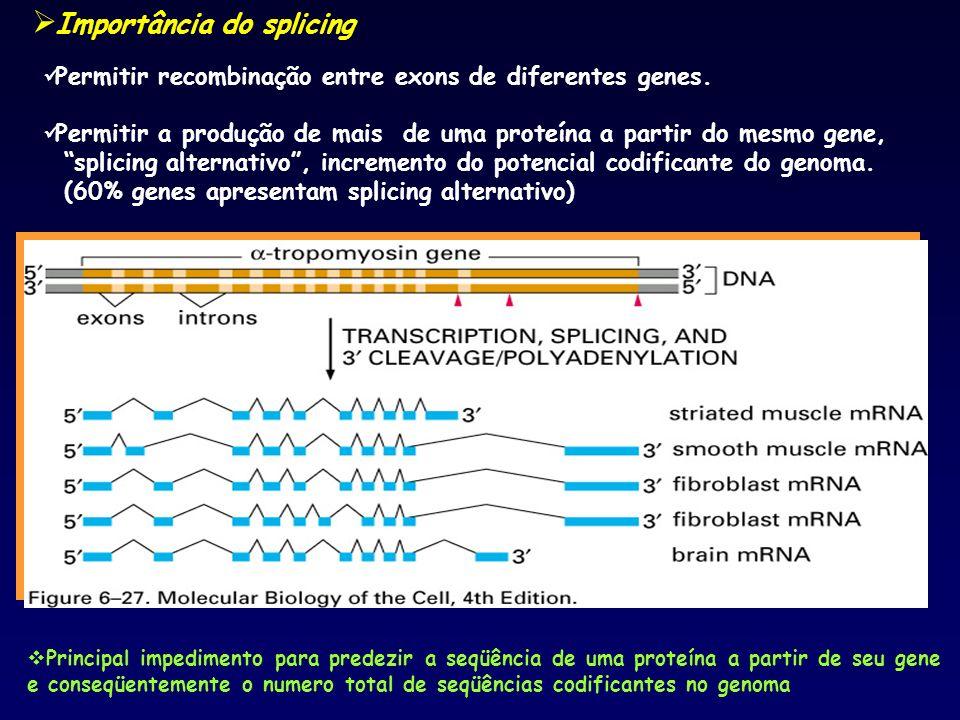 Permitir recombinação entre exons de diferentes genes. Permitir a produção de mais de uma proteína a partir do mesmo gene, splicing alternativo, incre