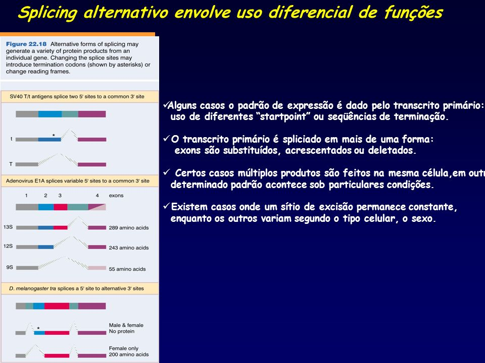 Splicing alternativo envolve uso diferencial de funções Alguns casos o padrão de expressão é dado pelo transcrito primário: uso de diferentes startpoi