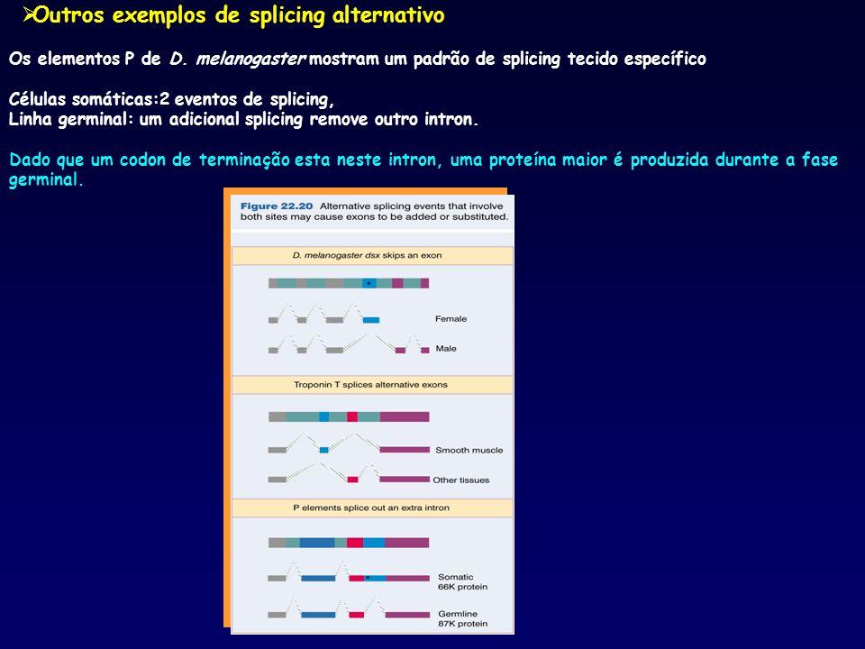 Outros exemplos de splicing alternativo Os elementos P de D. melanogaster mostram um padrão de splicing tecido específico Células somáticas:2 eventos