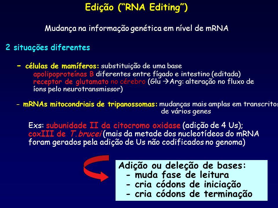 Edição (RNA Editing) Mudança na informação genética em nível de mRNA Adição ou deleção de bases: - muda fase de leitura - cria códons de iniciação - c