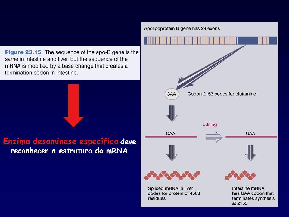 Enzima desaminase específica Enzima desaminase específica deve reconhecer a estrutura do mRNA