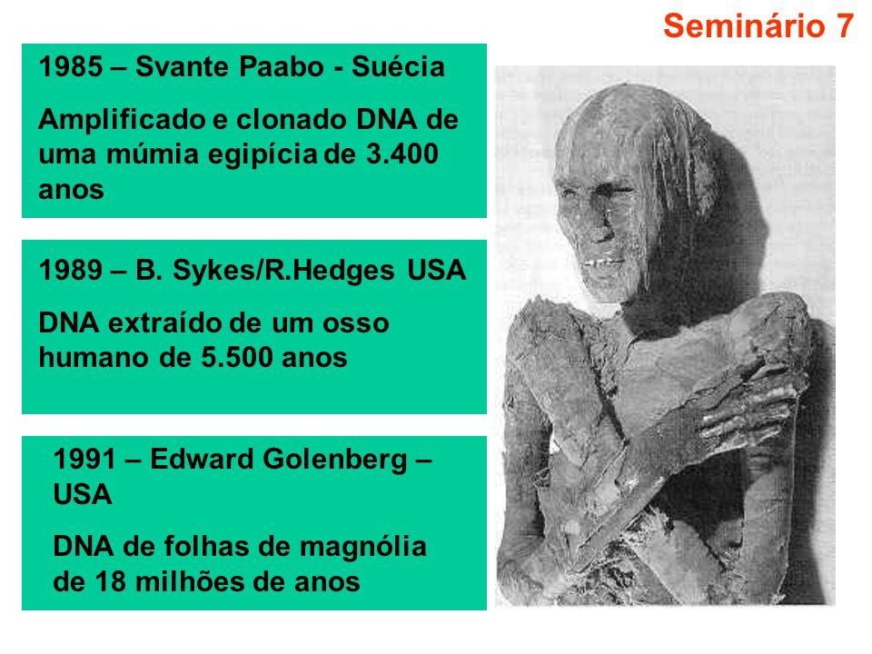 Seminário 7 1985 – Svante Paabo - Suécia Amplificado e clonado DNA de uma múmia egipícia de 3.400 anos 1989 – B. Sykes/R.Hedges USA DNA extraído de um