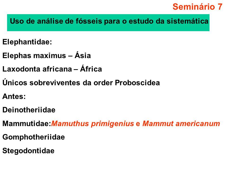Seminário 7 Estudos morfológicos:Elephas e Mammuthus monofiléticos Mas não há base molecular nessa afirmação Análise molecular da seqüência parcial do citocromo b Amostras: Amostras de tres fósseis e duas amostras em museu: Amostras do museu: pele conservada em solução salina de Elephas maximus (1980) e de Loxodonta africana (1992); Amostras de fósseis: Mamuthus primigenius (mammuthus- 1), pele seca de espécime da Sibéria encontrada em 1907; (mammuthus- 2), fragmento de crânio de 1947 – Alaska; Mammut americanum – esqueleto, 1968 - USA