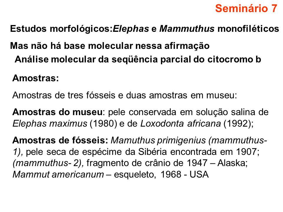 Seminário 7 Estudos morfológicos:Elephas e Mammuthus monofiléticos Mas não há base molecular nessa afirmação Análise molecular da seqüência parcial do