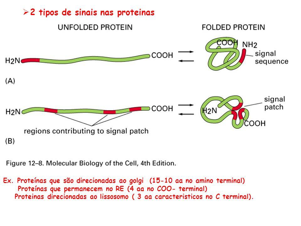 2 tipos de sinais nas proteinas Ex. Proteínas que são direcionadas ao golgi (15-10 aa no amino terminal) Proteínas que permanecem no RE (4 aa no COO-