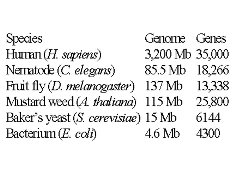 Eucaryote Chromosome Numbers OrganismCommon Diploid Chromosome Name Number _____________________________________________________ Myrmecia pilosulaAnt 2 Felis catusCat 38 Homo sapiensHuman 46 Canis familiarisDog 78 Ophioglossum reticulatumFern1260