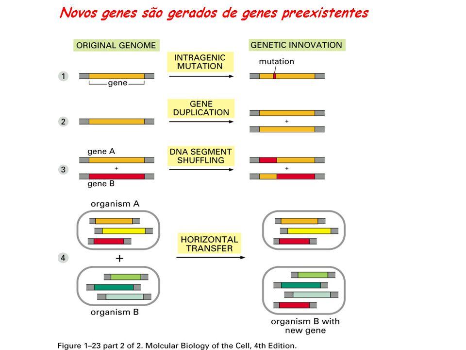 A seleção natural geralmente favorece a aqueles procariotos que se reproduzem mais rápido e captam nutrientes com mais eficiência.