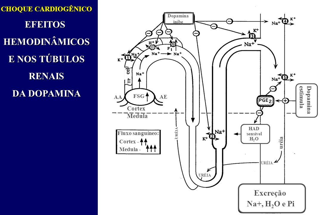 CHOQUE CARDIOGÊNICO EFEITOSHEMODINÂMICOS E NOS TÚBULOS RENAIS RENAIS DA DOPAMINA Dopamina inibe TP AA AE FSG Cortex Medula Fluxo sanguíneo: Cortex - Medula - URÉIA HAD sensível H 2 O URÉIA uréia Dopamina estimula Excreção Na+, H 2 O e Pi cel