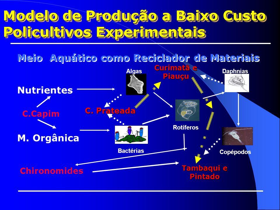 Meio Aquático como Reciclador de Materiais Nutrientes M. Orgânica Algas Bactérias Rotíferos Daphnias Copépodos C. C.Grande C. Prateada C. Comum Tilápi