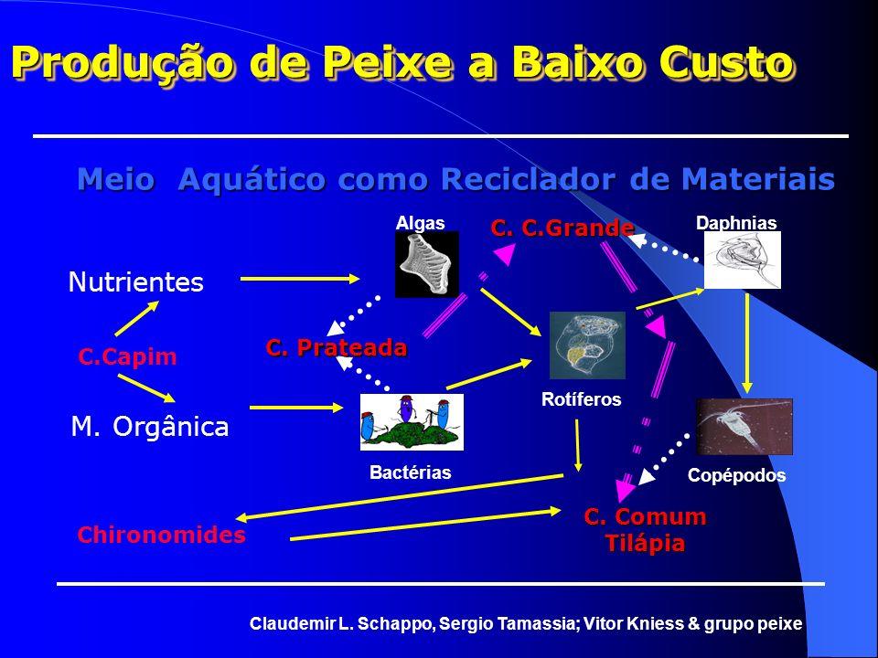 Modelo de Produção a Baixo Custo Região Centro-Sul de Rondônia Modelo de Produção a Baixo Custo Região Centro-Sul de Rondônia Claudemir L. Schappo, Se