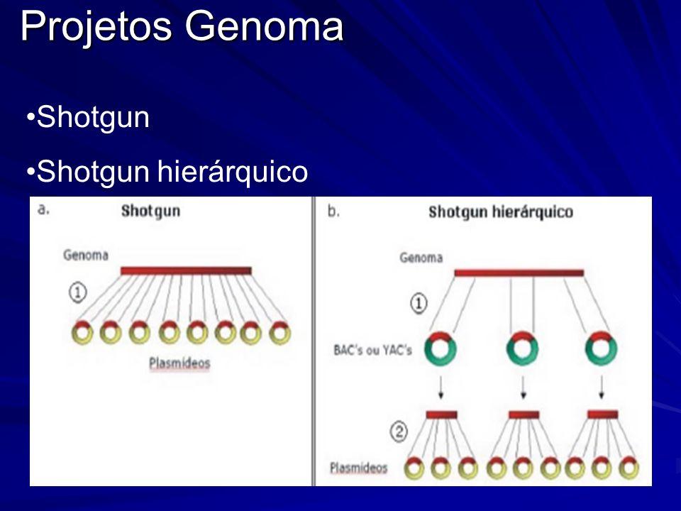 Projetos Genoma Projetos Genoma Shotgun Shotgun hierárquico