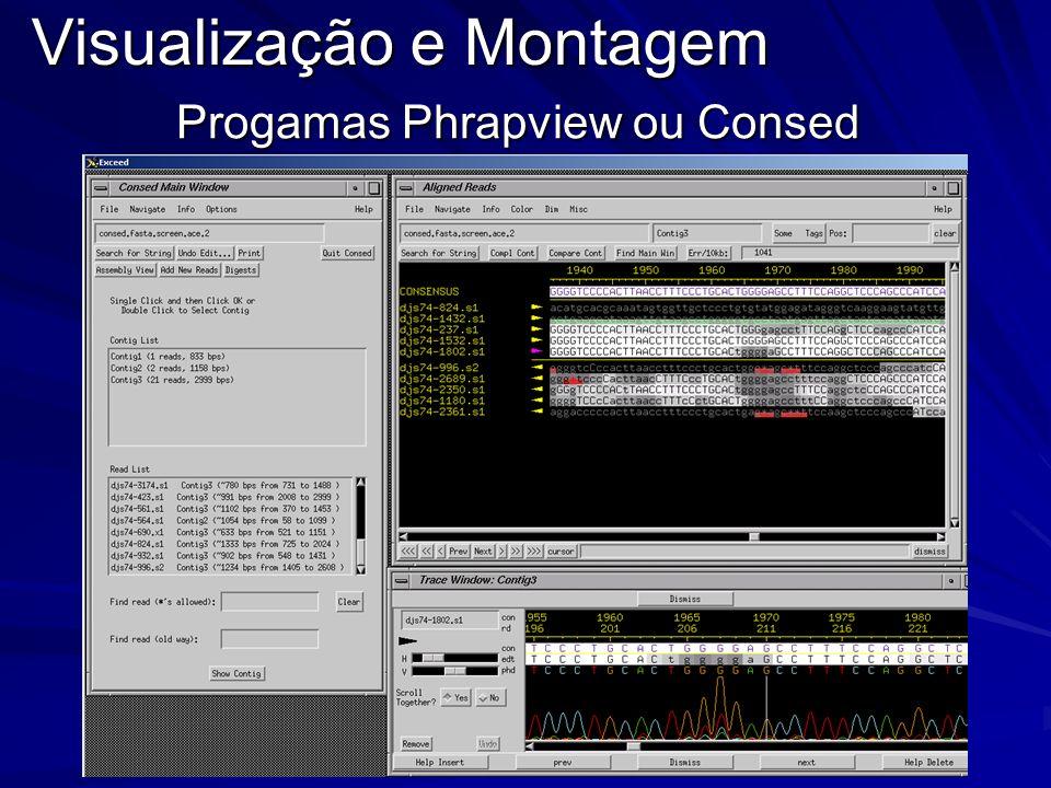 Visualização e Montagem Progamas Phrapview ou Consed