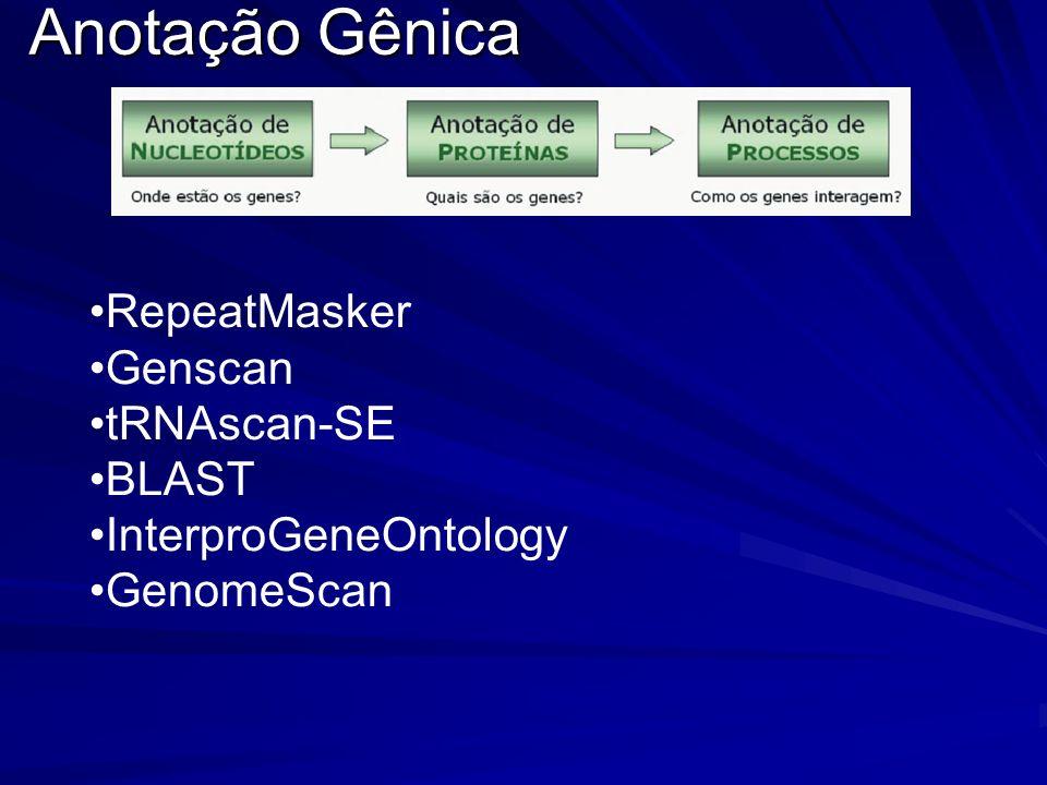 Anotação Gênica RepeatMasker Genscan tRNAscan-SE BLAST InterproGeneOntology GenomeScan