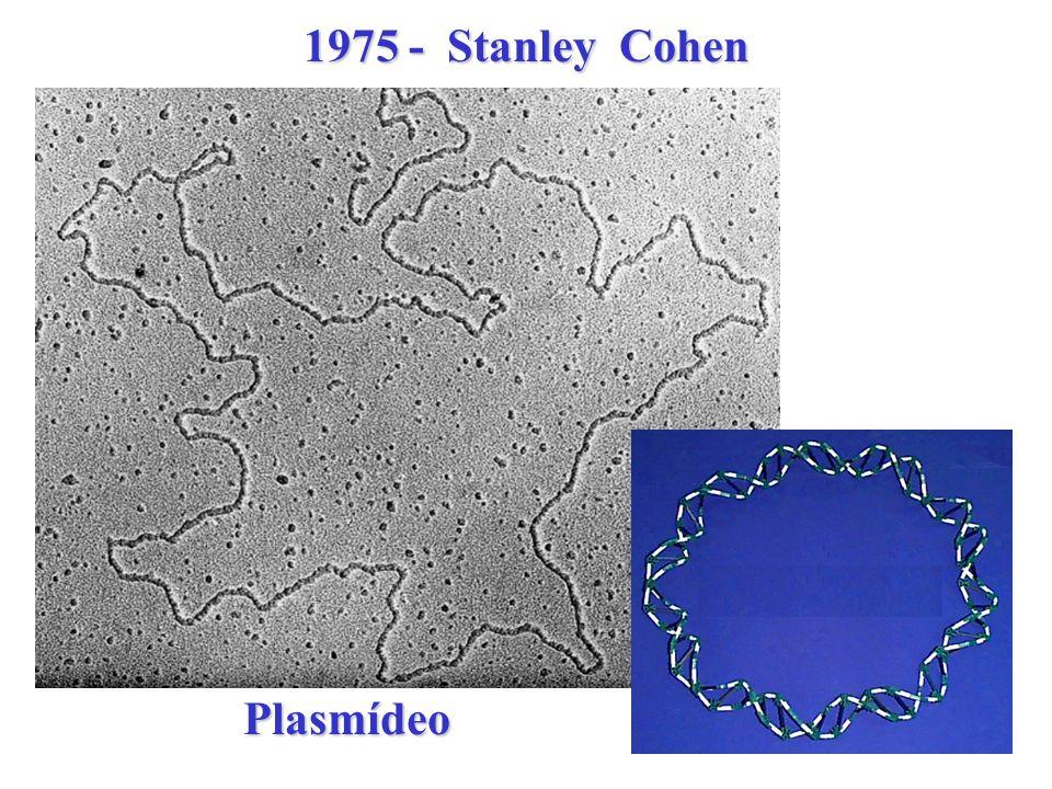 Conferencia de Asilomar - 1975 Pacific Grove - California USA - 139 cientistas de 17 nações - Recombinant DNA Advisory Commitee - RAC Normas para contenção biológica - P1 P4