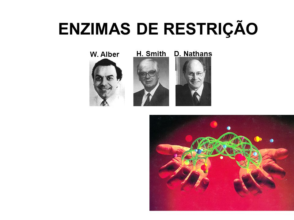 ENZIMAS DE RESTRIÇÃO W. Alber H. SmithD. Nathans