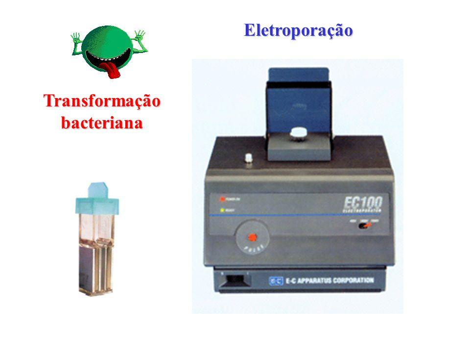 Transformação bacteriana Eletroporação