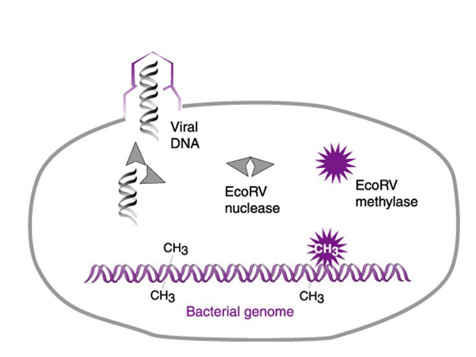A tecnologia do DNA recombinante
