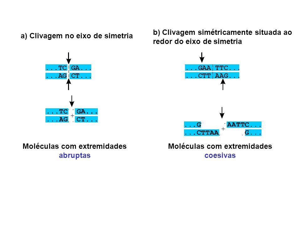 a) Clivagem no eixo de simetria Moléculas com extremidades abruptas Moléculas com extremidades coesivas b) Clivagem simétricamente situada ao redor do