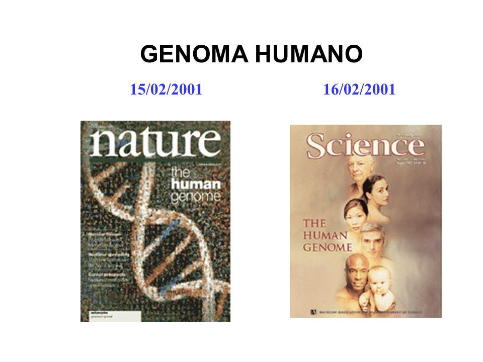 15/02/200116/02/2001 GENOMA HUMANO