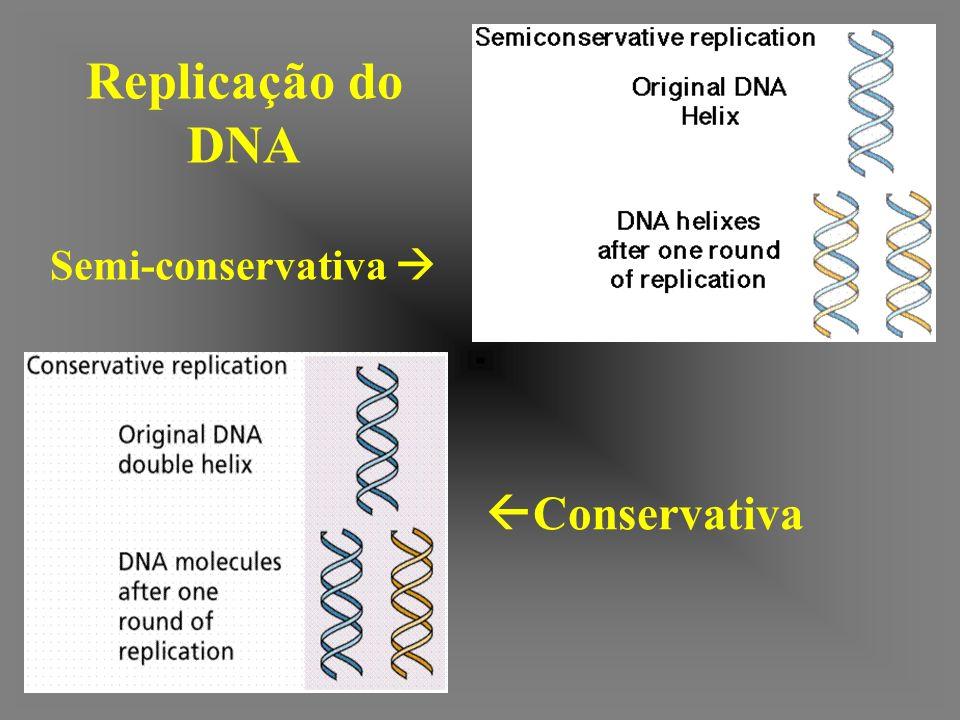 Proteína SSB/DNA de fita simples