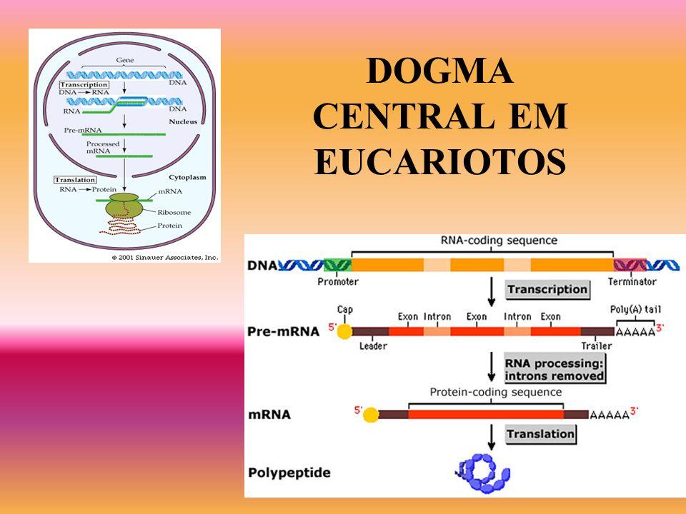 DOGMA CENTRAL EM EUCARIOTOS