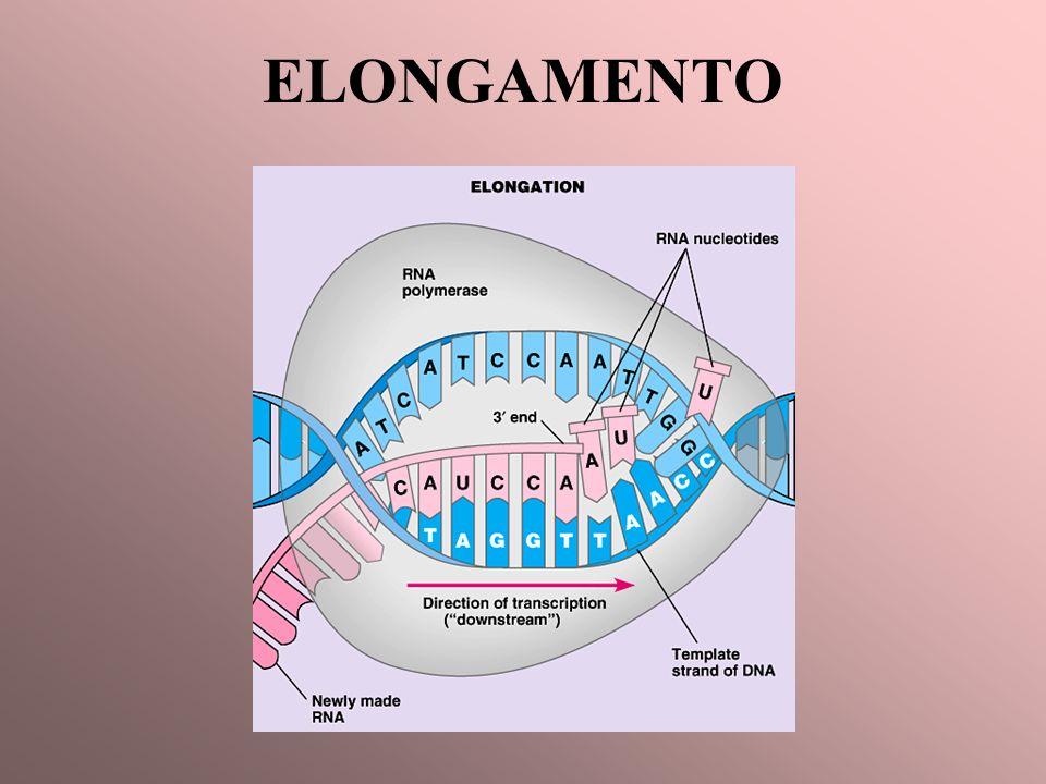 ELONGAMENTO