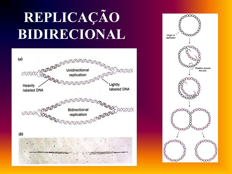 Replicação bidirecional em fago Lambda