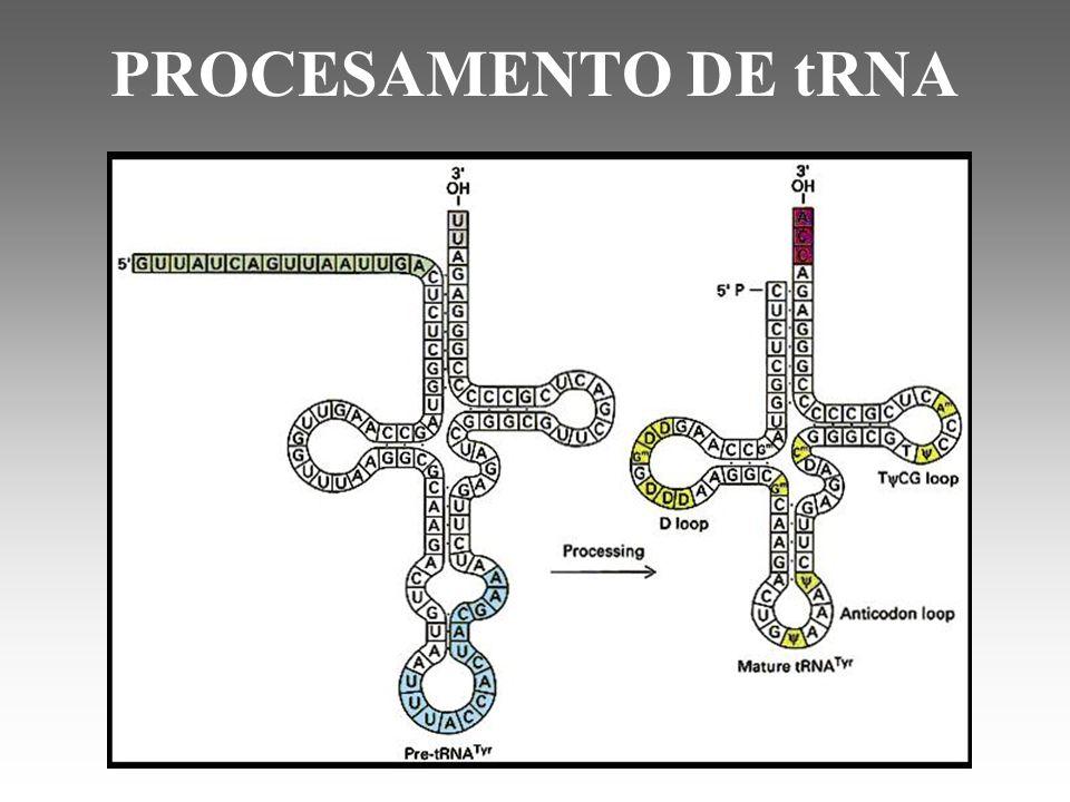 PROCESAMENTO DE tRNA