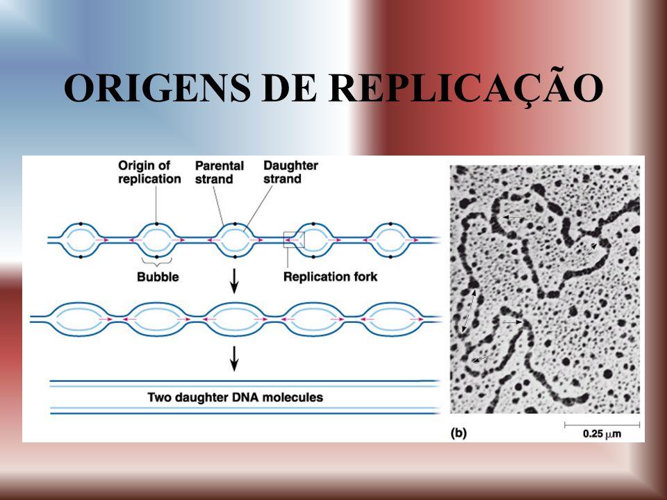 Síntese de DNA