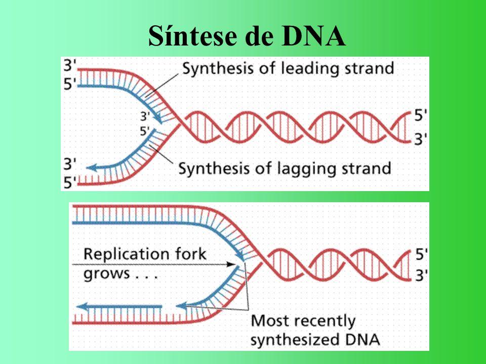 ESTRUTURA DOS GENES