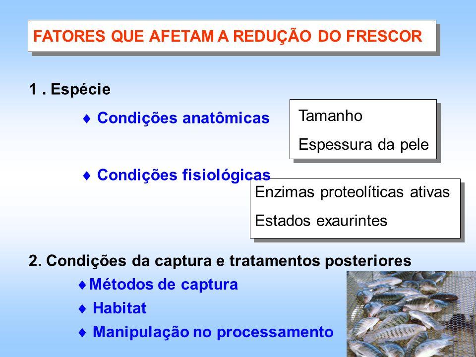Tamanho Espessura da pele Enzimas proteolíticas ativas Estados exaurintes FATORES QUE AFETAM A REDUÇÃO DO FRESCOR 1. Espécie Condições anatômicas Cond