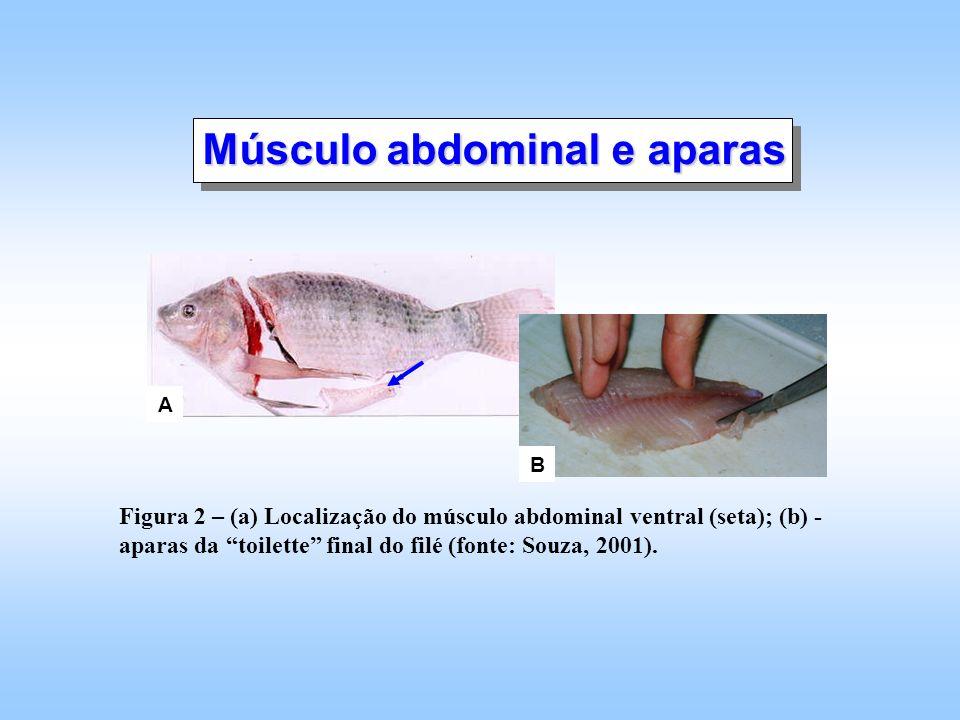A B Figura 2 – (a) Localização do músculo abdominal ventral (seta); (b) - aparas da toilette final do filé (fonte: Souza, 2001). Músculo abdominal e a