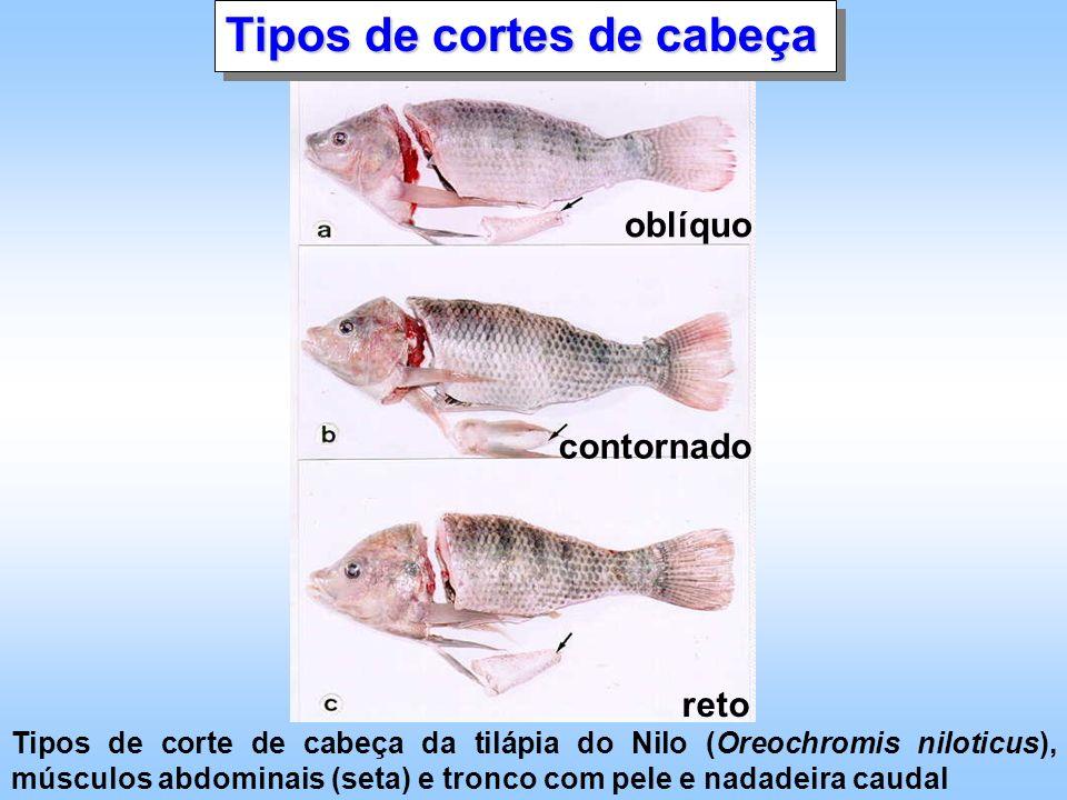 Tipos de cortes de cabeça oblíquo contornado reto Tipos de corte de cabeça da tilápia do Nilo (Oreochromis niloticus), músculos abdominais (seta) e tr