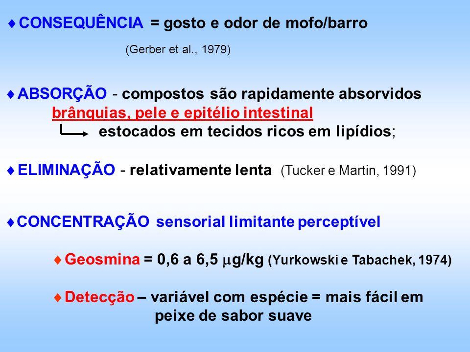 CONSEQUÊNCIA = gosto e odor de mofo/barro (Gerber et al., 1979) ABSORÇÃO - compostos são rapidamente absorvidos brânquias, pele e epitélio intestinal