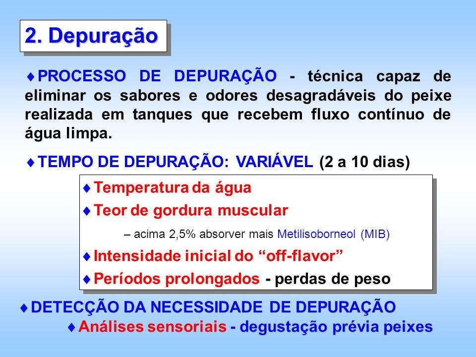 B C D A * Figura 1 – (a) Localização do músculo hipaxial profundo (seta); (b) músculo hipaxial profundo retirado (seta); (c) músculo hipaxial (seta) e músculo abdominal ventral (*);(d) porém o procedimento normal é a remoção desse músculo (seta) após a retirada do filé (fonte: Souza, 2001; Souza e Macedo-Viegas, 2000, 2001).